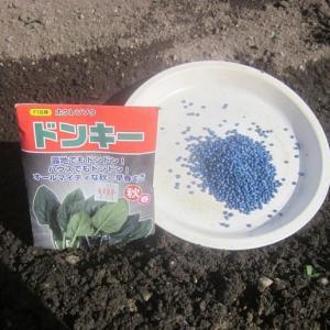 葉物野菜の種蒔き