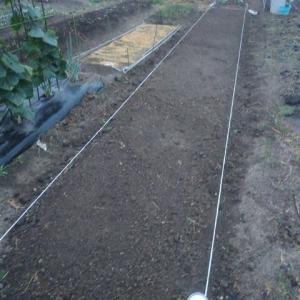 葉物野菜用の畝作り