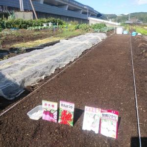 冬野菜の種蒔き