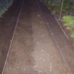 タマネギの畝作り着手しました。