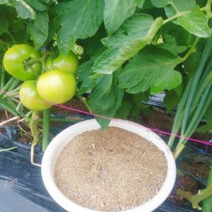 トマトに追肥