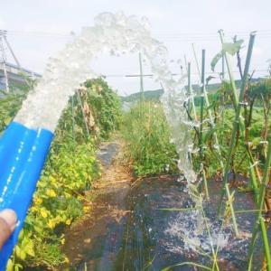 農業用水用のホースを頂きました。