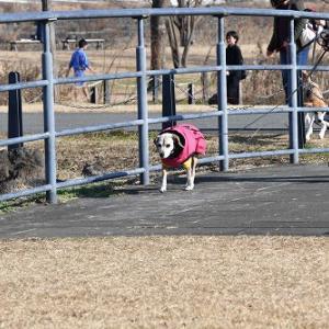チャーリードッグスクールのお散歩トレーニングのすすめ