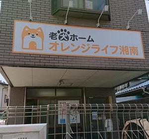 老犬ホーム見学会