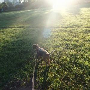 犬の楽しみ