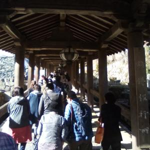 奈良、大和歴史旅。終わりに室生寺と長谷寺と、