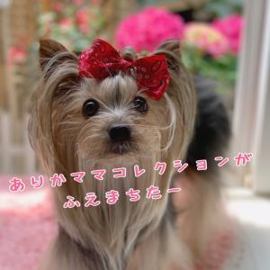 ピンクの紫陽花とか リンツのチョコとか