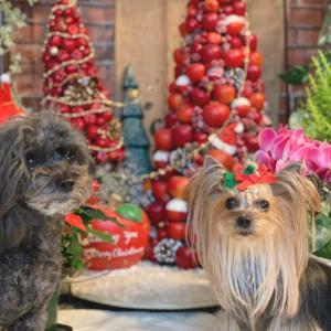 気になる 気になる クリスマスツリー