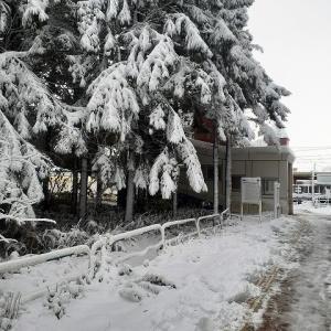11/9から雪降った