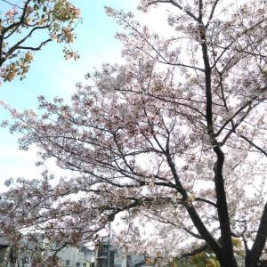 泉北ホームさん。神崎先生に褒めて頂いてますよ!!