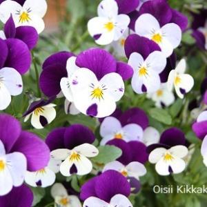 【 5月の花壇と私の在宅デスク 】