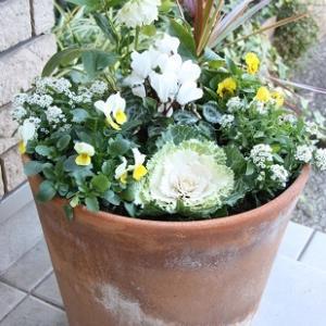 【 今年は白色ベースで、冬の寄せ植え 】