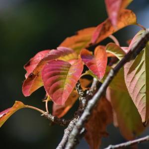 千秋公園の秋・つながる青空市からサンフェスタへ