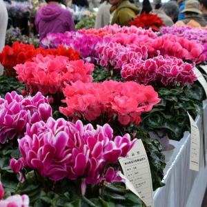 花の祭典・千秋公園から土手長町通りへ