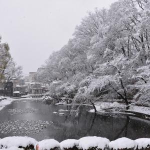 千秋公園の雪景色、大学病院から手形通り、西口へ歩く