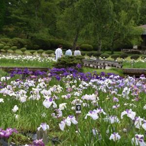 追分三差路からハナショウブ咲く小泉潟公園へ