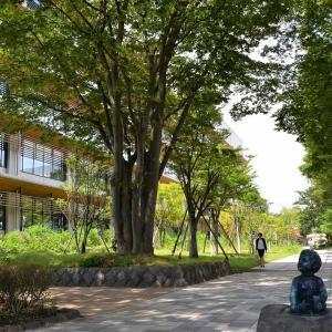 市役所から草生津川コスモスロードへ歩く