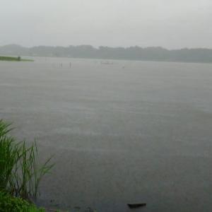 雨の手賀沼