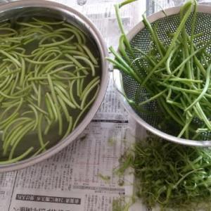 K農園から野菜 どっさり! 。。。芋つるの茎処理に。