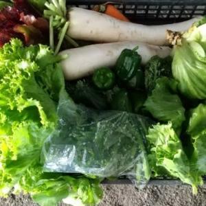 新鮮野菜 宅配 !