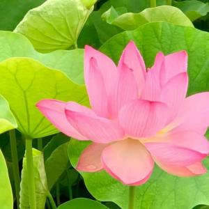 仏教幸福学