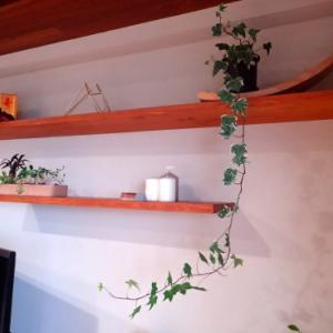 植物の伸びと増殖。