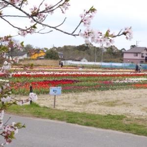 祭りは中止でも花は咲く