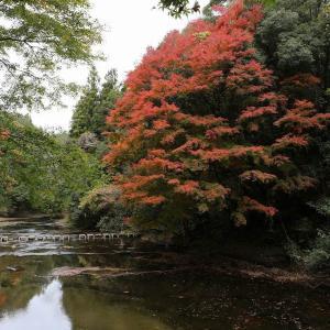 養老渓谷の紅葉はここ?