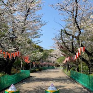 桜は来年の楽しみにしておきます