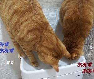 トイレのお水