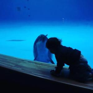 イルカと何話してるの