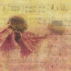 音楽で過去の感情が蘇る:「誰このブス」& 告白