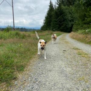 ルナ&スカとトレイル散歩。