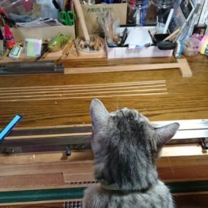 猫の手も借りたい!?