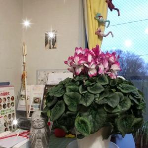 大晦日期限の1万円のお花の使い道