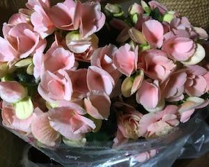 お花探しでグルグルぐるぐる。