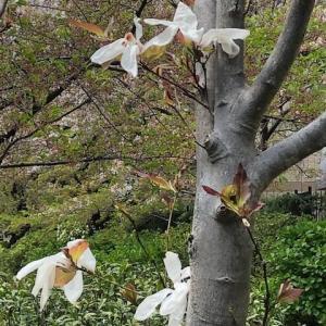トイレットペーパーの木とタワシの木