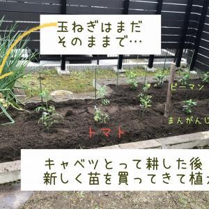 初めてのたまねぎ収穫♪