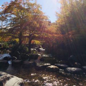 旦飯野神社で新月ご祈祷していただきました・10月のことになりますがね