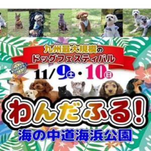 10/22トリミングpart1♪わんだふるイベント