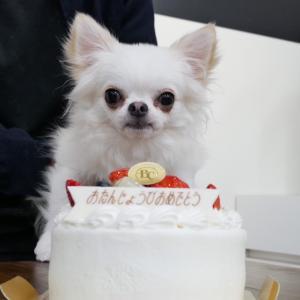 3/4トリミングpart2  キメ顔わたさんとケーキ