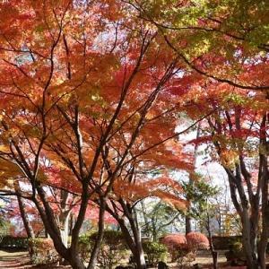 千秋公園へ