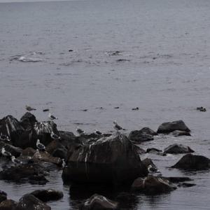 象潟漁港へ