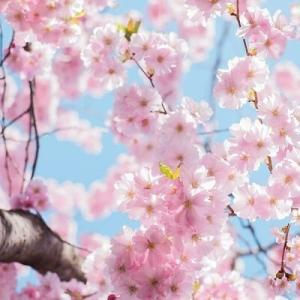 「桜の塔」の名台詞と掛けて某ソーシャルレンディング会社と解く、その心は?