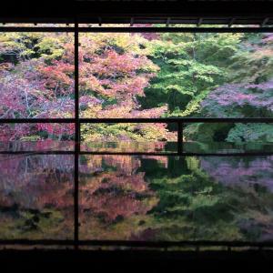 瑠璃光院に紅葉を見に行って来ました。