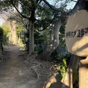 神明六木遊歩道(武蔵野の路)|約2キロのお気に入りのジョグコース