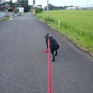 7月最後のお散歩は、梅雨明けを期待出来そなお空でした