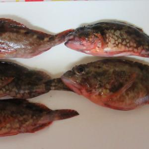 魚種豊富な油津港