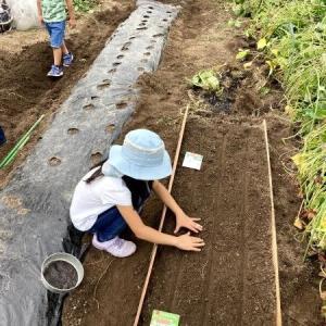 畑記録 2021/9/1 新しい畑