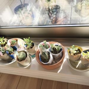 植物が増えました。